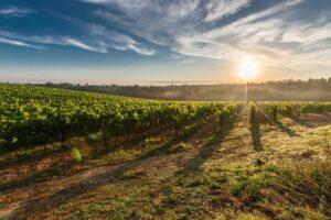 Facolta d'Agraria in Italia: dove iscriversi
